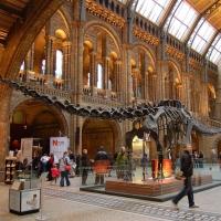 London: Natural History Museum