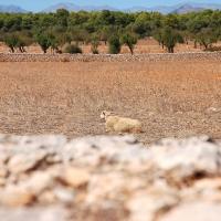 Mallorca: Platja de Son Real