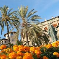 Mallorca: Palma de Mallorca